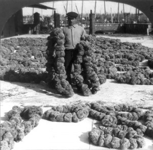 Man holding sea sponges threaded together with surrounded by more sponges.