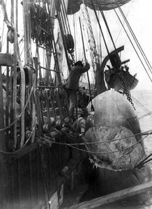 Sailors cut up the carcass of a sperm whale off the side of a ship.