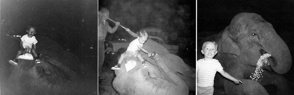 A series of three photos showing a young boy, Mel Ray Silverlake, playing with an elephant.