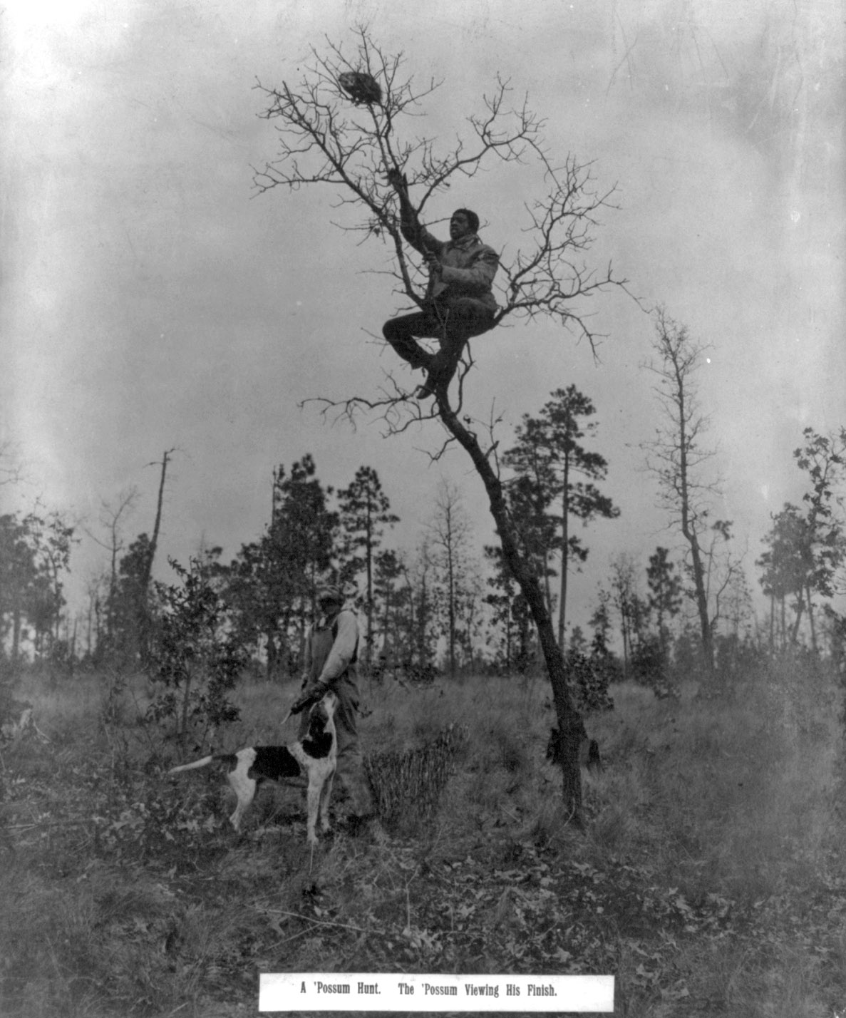 Photograph shows an African American man sitting on a branch reaching towards an oppossum that's climbed to the top of the tree; a man with dog wait below.