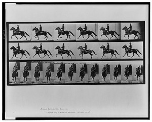 Animal locomotion by Eadweard Muybridge (Philadelphia, Photogravure Company of New York, 1887, pl. 593)