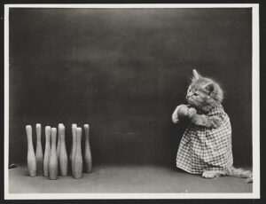 Photograph shows a kitten preparing to bowl