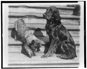 Whoopie and Englehurst Gillette two of the White House dogs with Robert R. Robinson (March 29, 1929). Library of Congress Prints and Photographs Division, //hdl.loc.gov/loc.pnp/cph.3c31290.