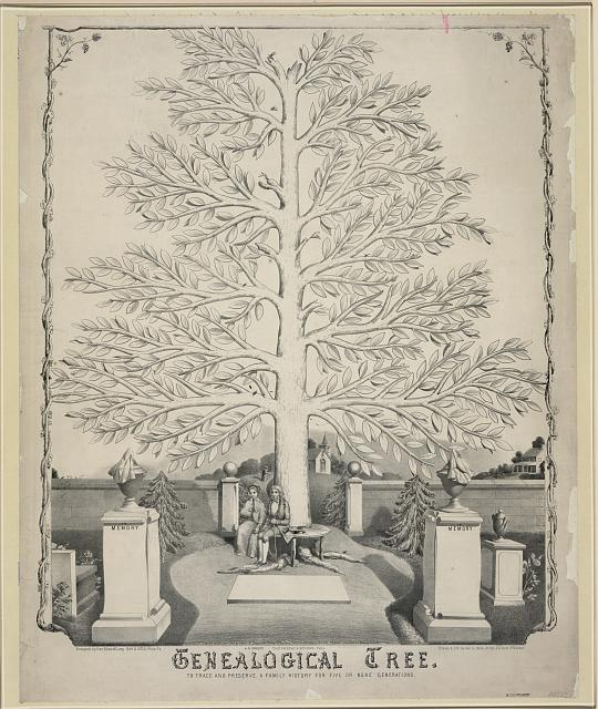 Genealogical tree prints and photographs division