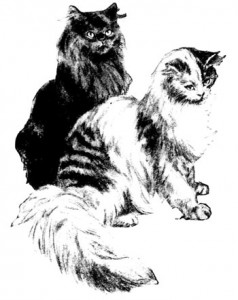 Illustration of two cats from Washington Evening Star, 9/5/1907