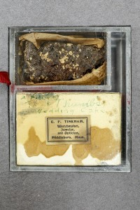 A piece of Tom Thumb's wedding cake, 1863. Minnie Maddern Fiske Papers, Manuscript Division.