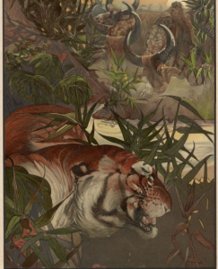 "Shere Khan in Jungle, ""The Jungle Book,"" pg. 108, 109. Rare Book and Special Collections Division."