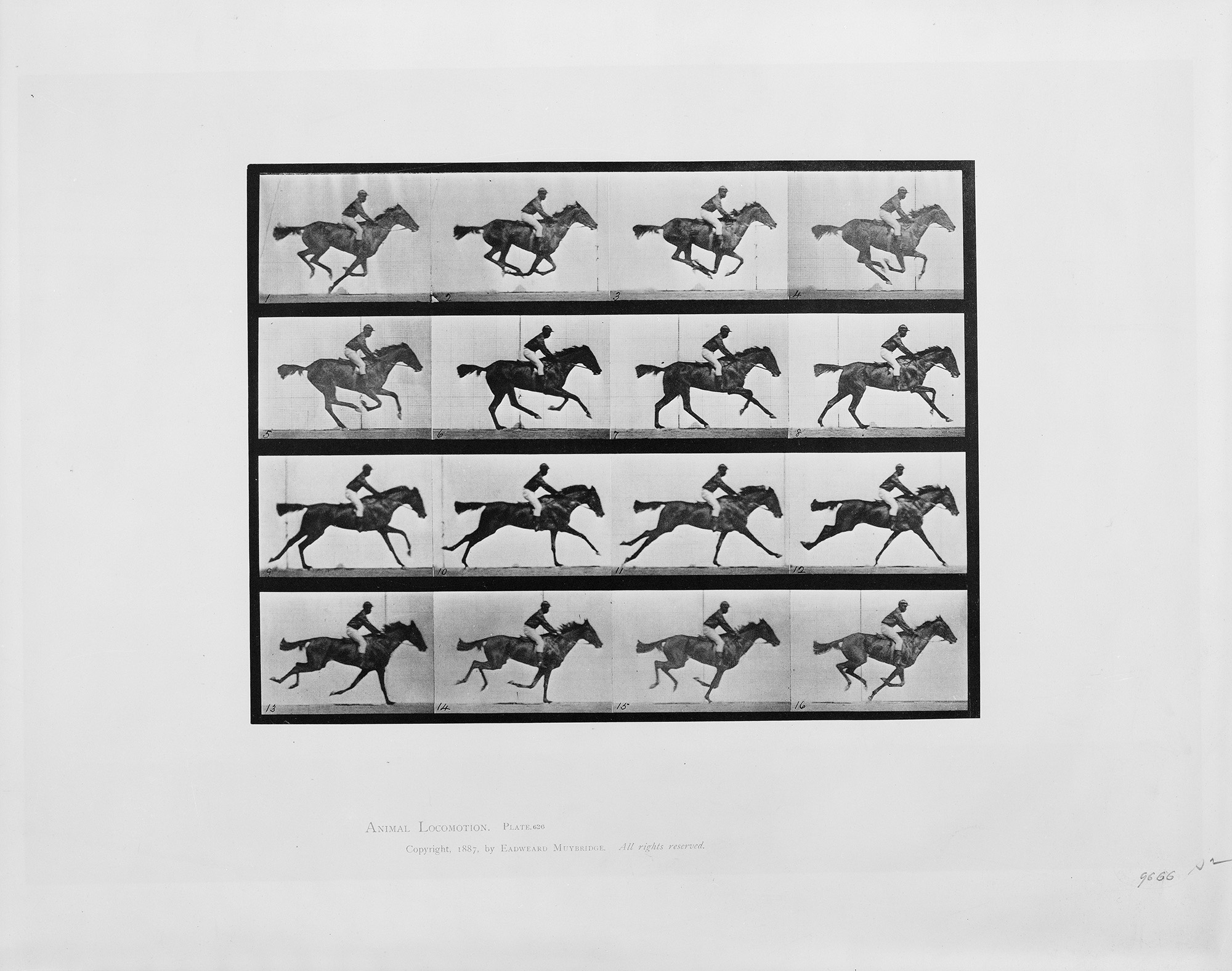 "Animal locomotion - 16 frames of racehorse ""Annie G."" galloping. Collotype, copyrighted by Eadweard Muybridge, 1887. //hdl.loc.gov/loc.pnp/cph.3b00681"