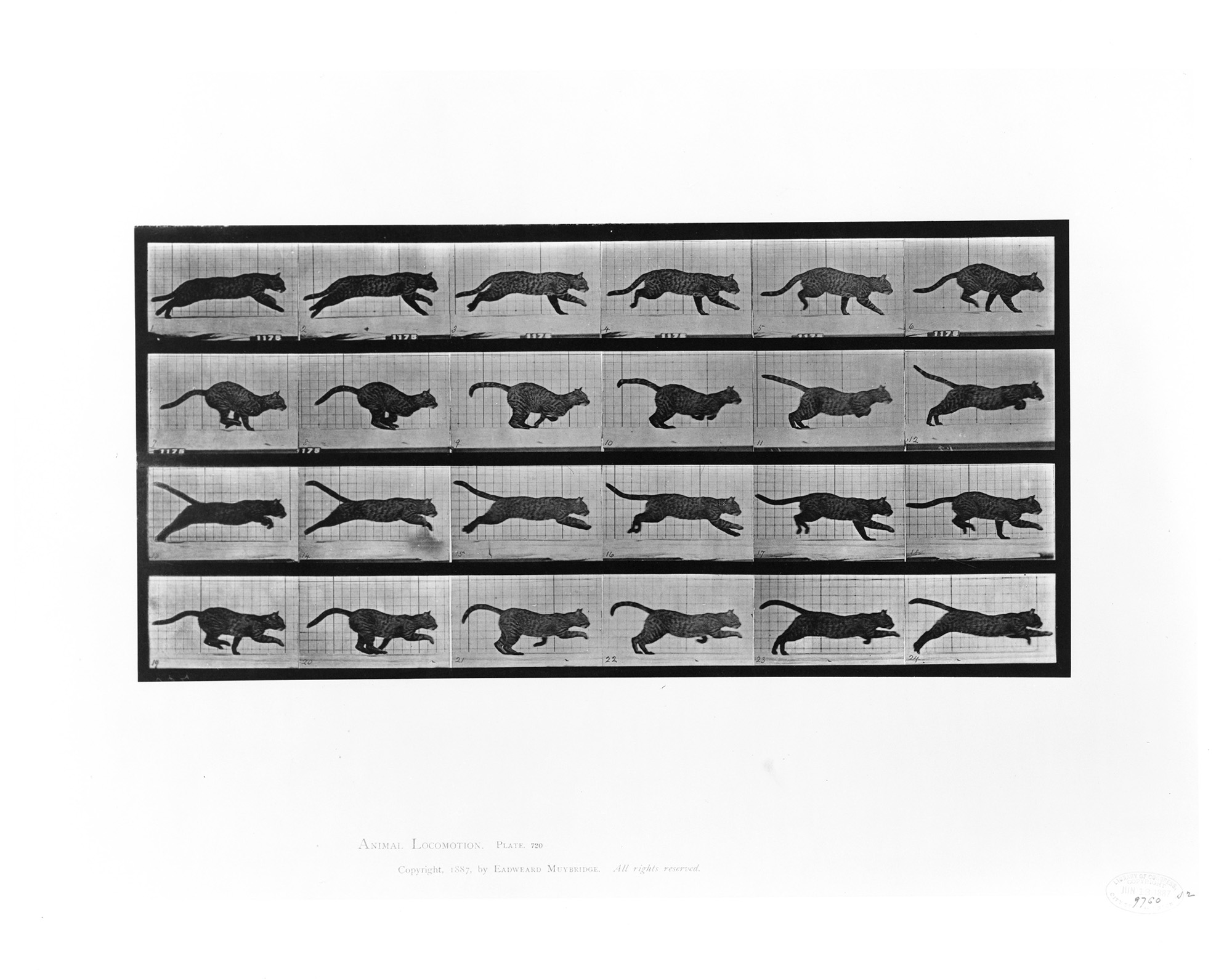 Animal locomotion. (Cat running.) Collotype, copyrighted by Eadweard Muybridge, 1887. //hdl.loc.gov/loc.pnp/cph.3c21044