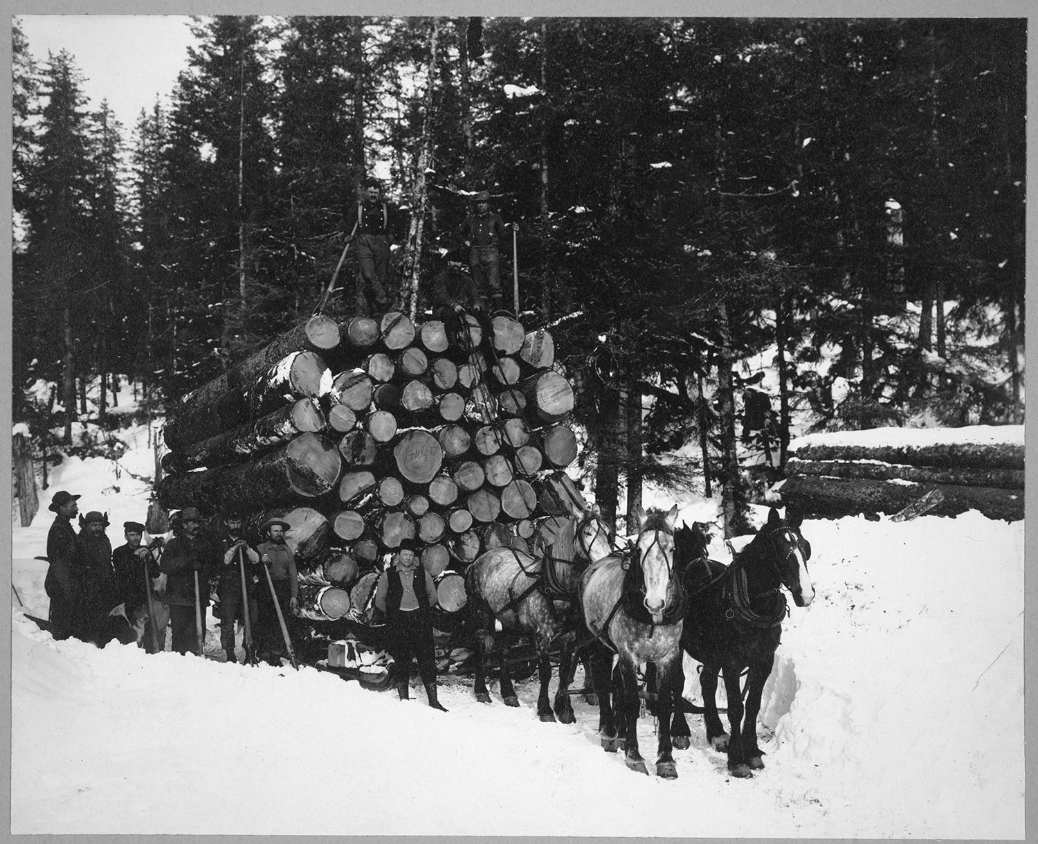 Logs being hauled on a sleigh by a team of horses along the government railway, 35 miles from Seward. Photo from Frank and Frances Carpenter Collection, between 1900 and 1930. //hdl.loc.gov/loc.pnp/ppmsc.01617