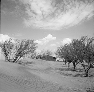 Sand dunes in orchard, Oklahoma. Photograph by Arthur Rothstein, March 1936. //hdl.loc.gov/loc.pnp/fsa.8b38305