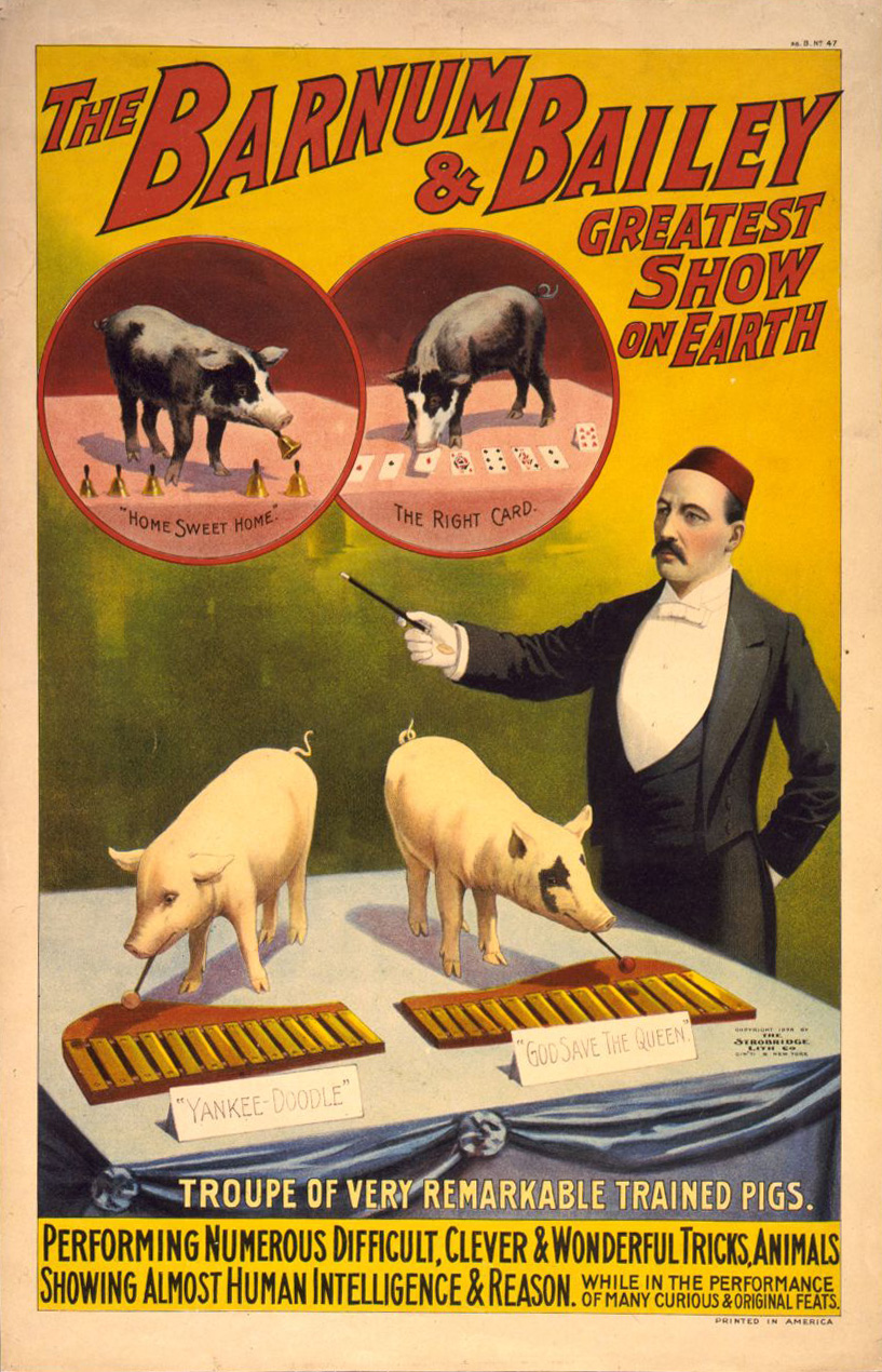 The Barnum & Bailey greatest show on earth--Troupe of very remarkable trained pigs. Poster by The Strobridge Litho Co., 1898. //hdl.loc.gov/loc.pnp/cph.3g02611