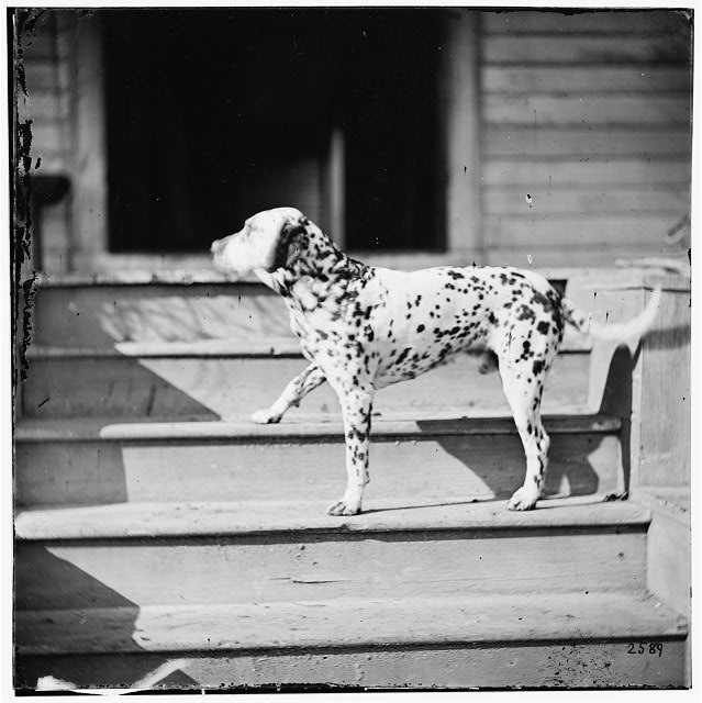 [City Point], Virginia. General Rufus Ingall's coach dog. Photo, 1865 March. //hdl.loc.gov/loc.pnp/cwpb.01994
