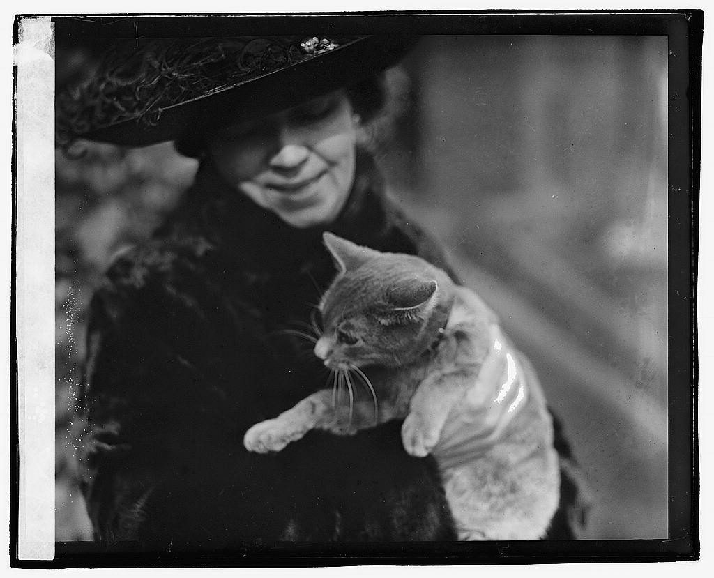 Cat story, 1/11/21. Photo by National Photo Company, 1921 January 11. //hdl.loc.gov/loc.pnp/npcc.03341