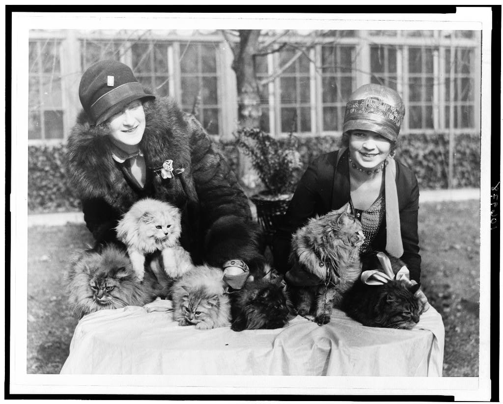 Washington cat show opens at Wardman Park Hotel. [Edna B. Doughty and Louise Grogan with Persian cats.] Photo by National Photo Company, between 1920 and 1932. //hdl.loc.gov/loc.pnp/cph.3c06978