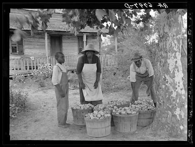 Rehabilitation client and wife with one day's tomato pick off coast of Beaufort, South Carolina. Photo by Carl Mydans, 1936. //hdl.loc.gov/loc.pnp/fsa.8b29054