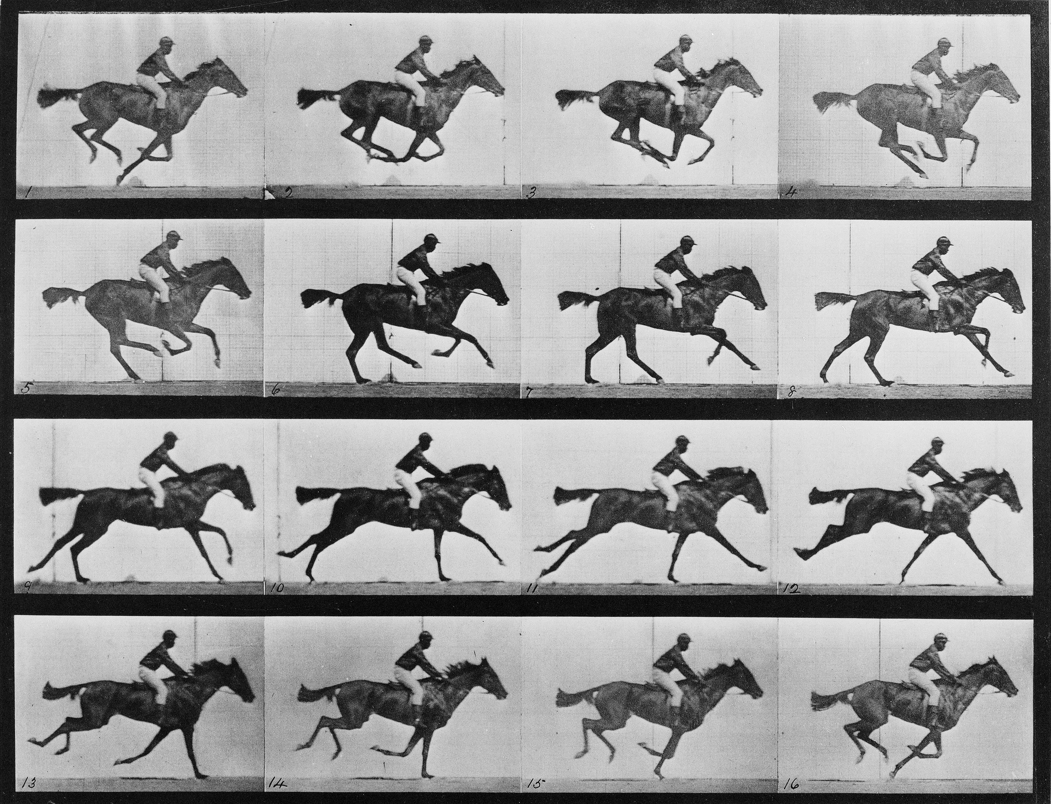 "Animal locomotion - 16 frames of racehorse ""Annie G."" galloping"