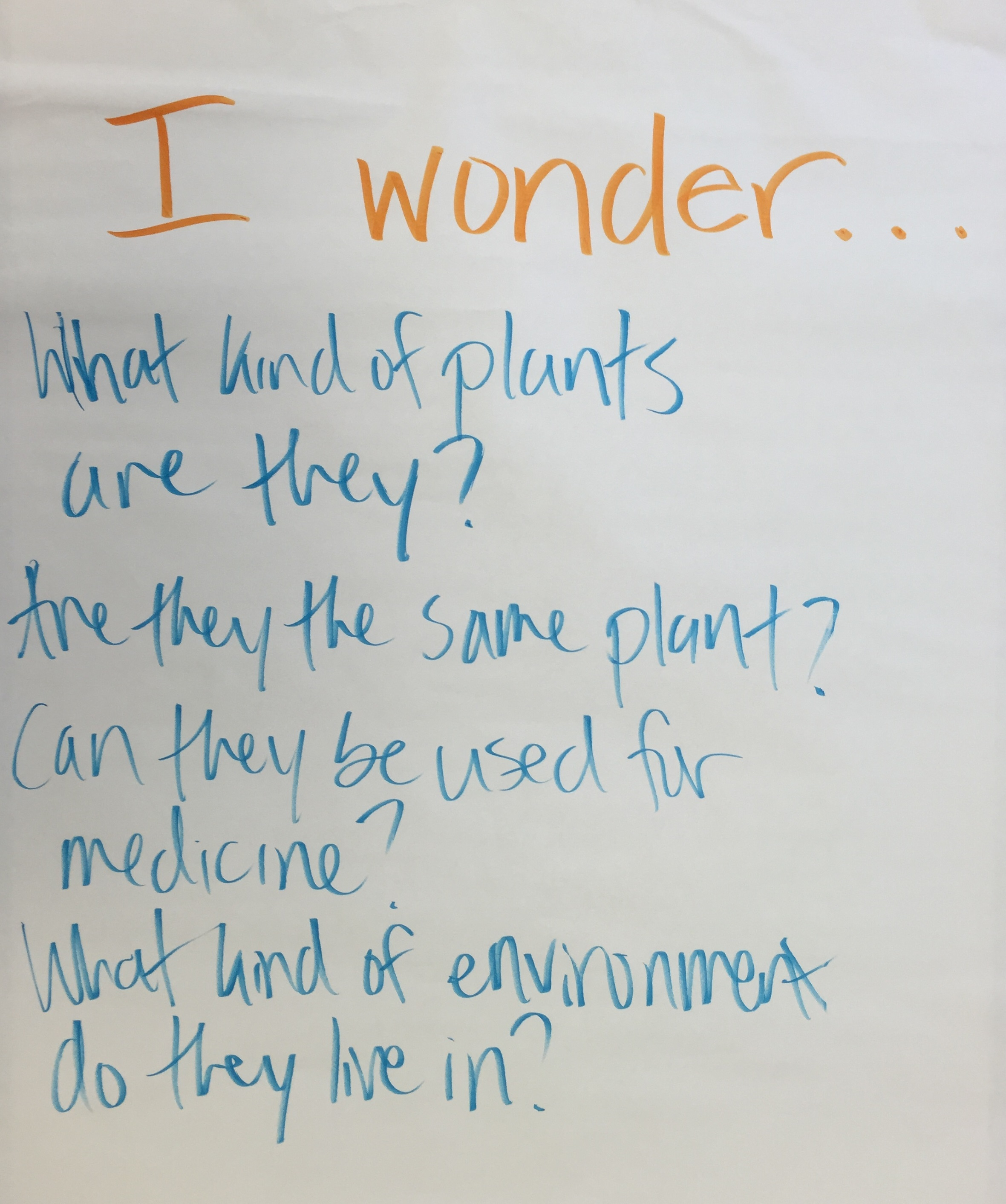 Students' questions about two plant specimens