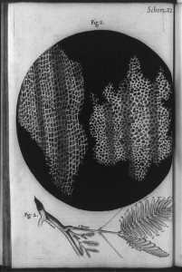 Cellular structure of cork plant and cells of a honeycomb, with cork plant branch below, Robert Hooke