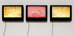Networked Nature. Gal Wight, by Rhizome.org, on Flickr